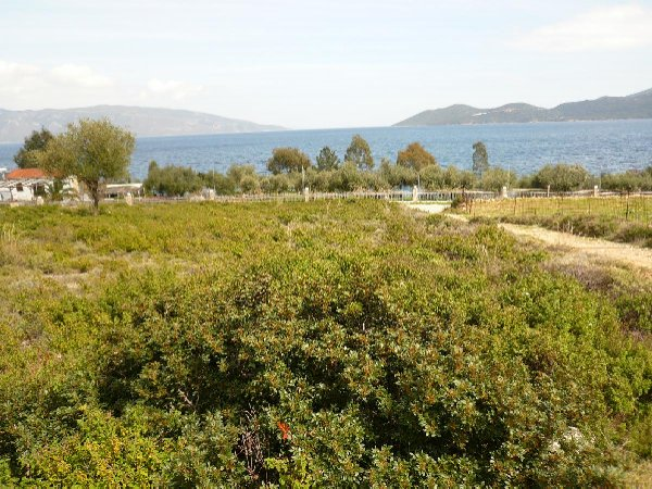 Land plot in Agia Paraskevi